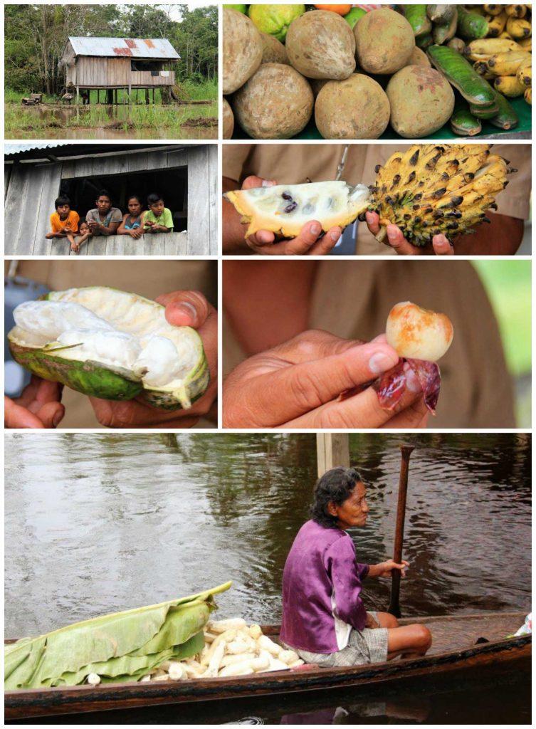 The Best Way to Explore the Amazing Amazon Rainforest compassandfork.com
